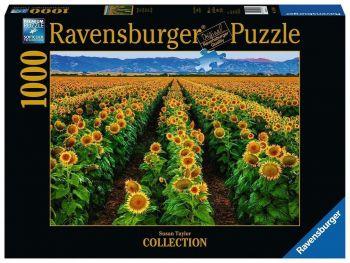 Sestavljanka Sončnice zlato polje Ravensburger 1000 delna