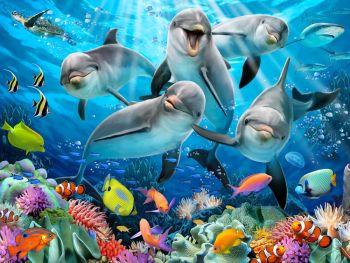 Sestavljanka 3D Dolphin Delight